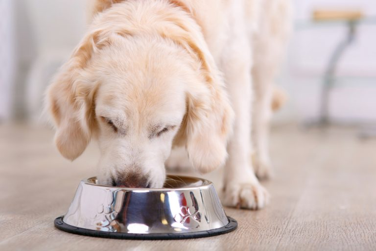 Dog Food Featured Image