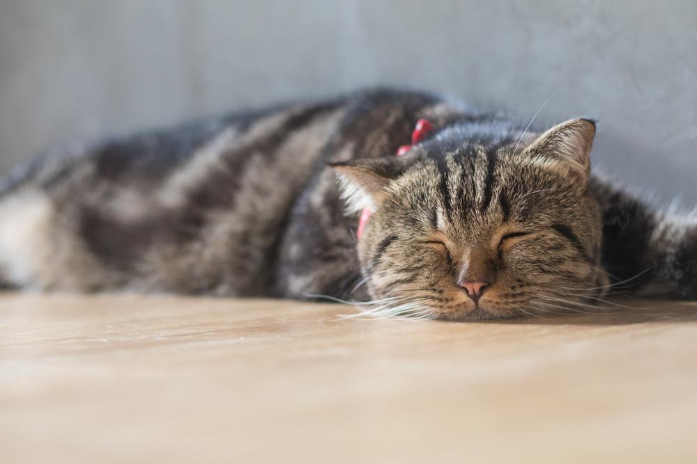 cat-not-feeling-so-well
