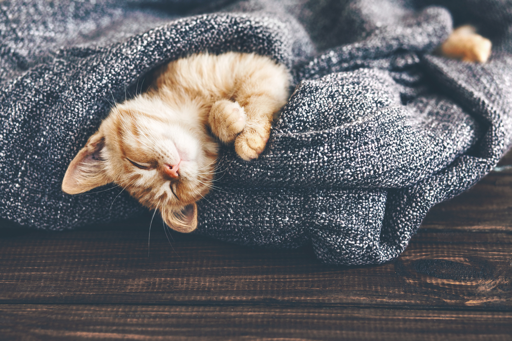cute-cat-sleeping