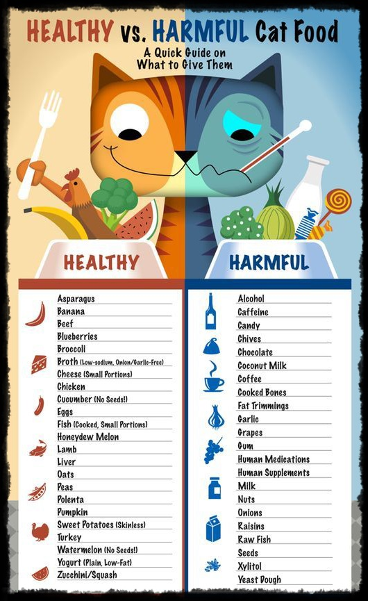 healthy-vs-harmful-cat-food-infographic