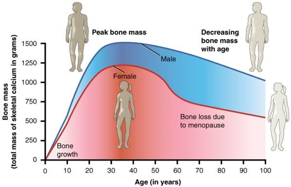 bone-mass-and-age-graph-calcium