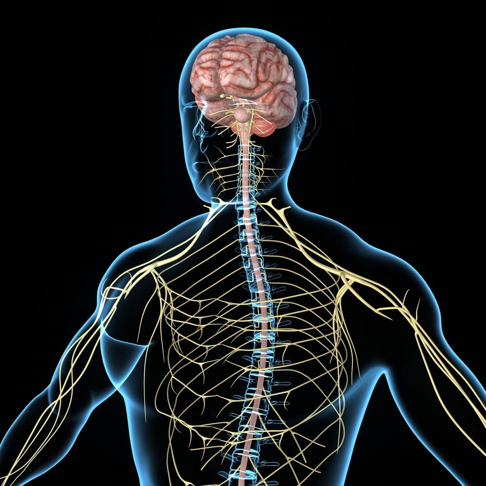 central-nervous-system