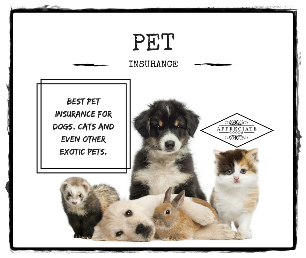 What Is The Best Pet Insurance For Dogs Reviews
