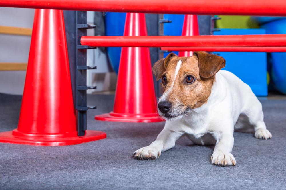 puppy-dog-at-rebah