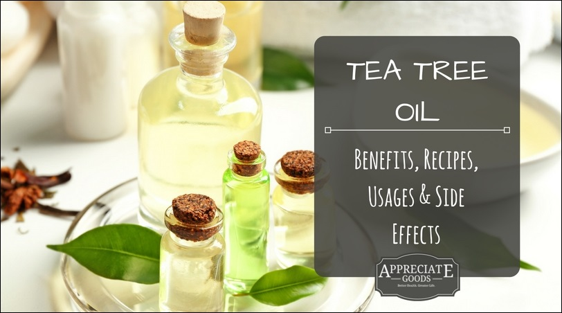 Tea tree oil benefits recipes usages side effects - Fir tree syrup recipe and benefits ...