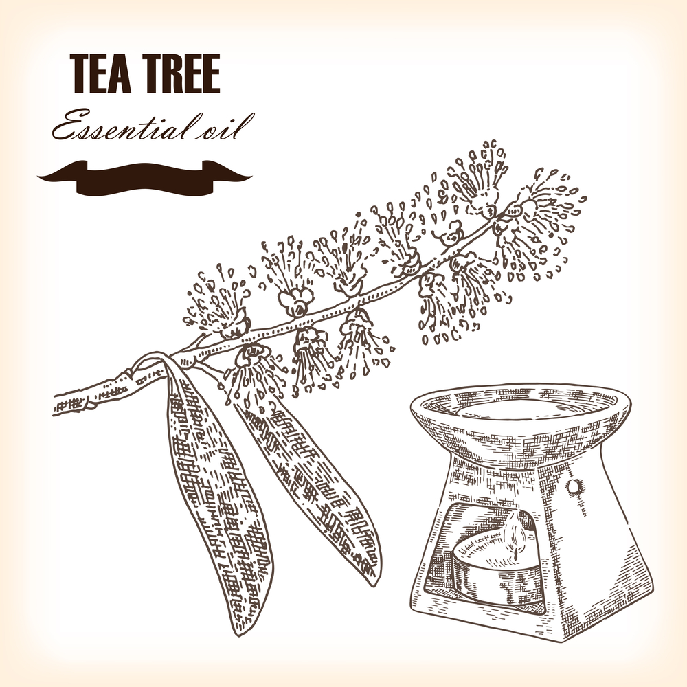 tea-tree-essential-oil-drawing
