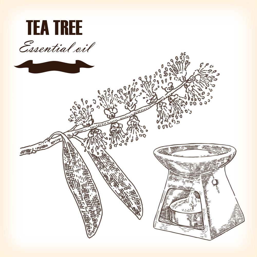 tea-tree-essential-oil-drawing