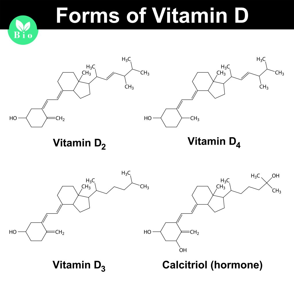 the-4-forms-of-vitamin-d