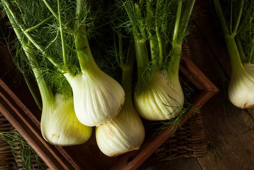 Bulb fennel