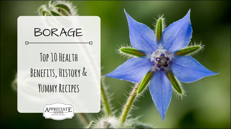 Natural Borage Oil