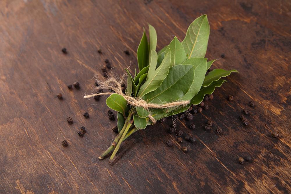 Bay Leaf 1