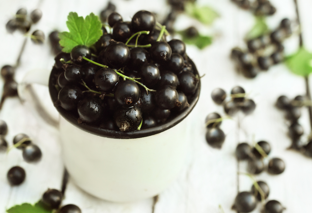 Black Currant Featured Image