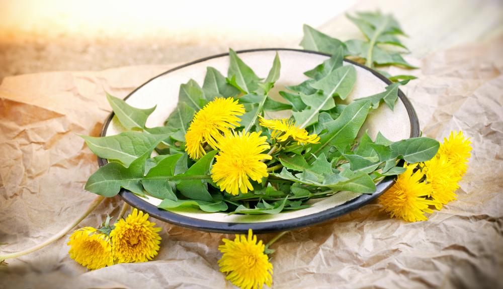 Dandelion Herb 1