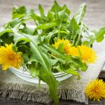 Dandelion Herb: History, Health Benefits, Nutrition Facts, Side Effects, Fun Facts