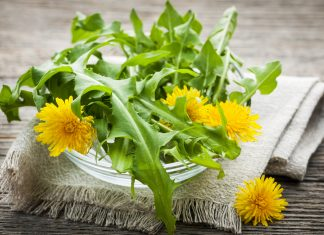 Dandelion Herb Article Featured Image