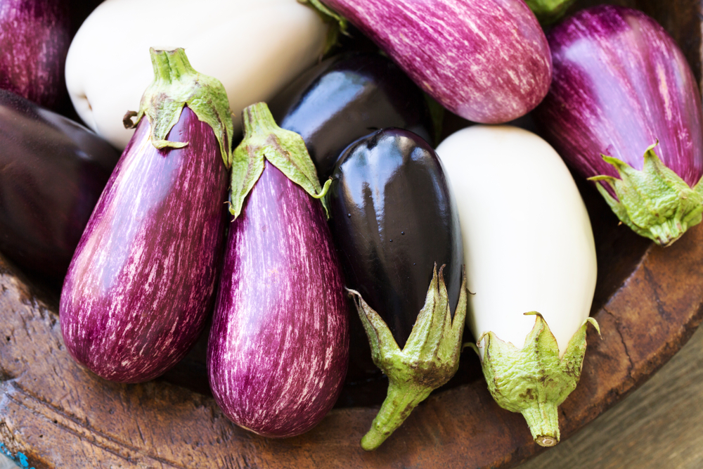 Different varieties of eggplant