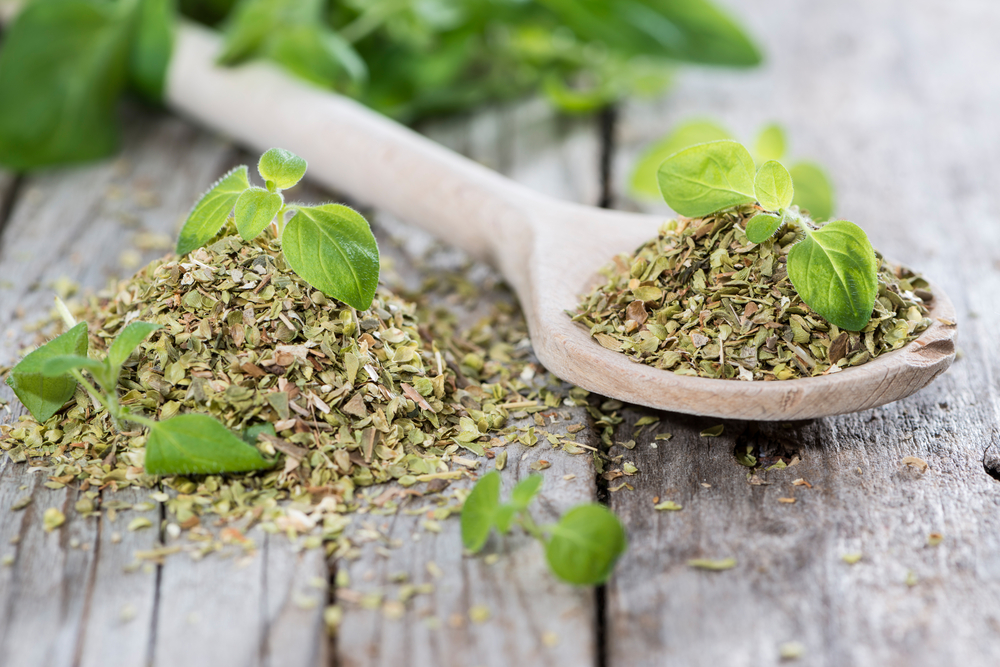 Oregano Featured Image