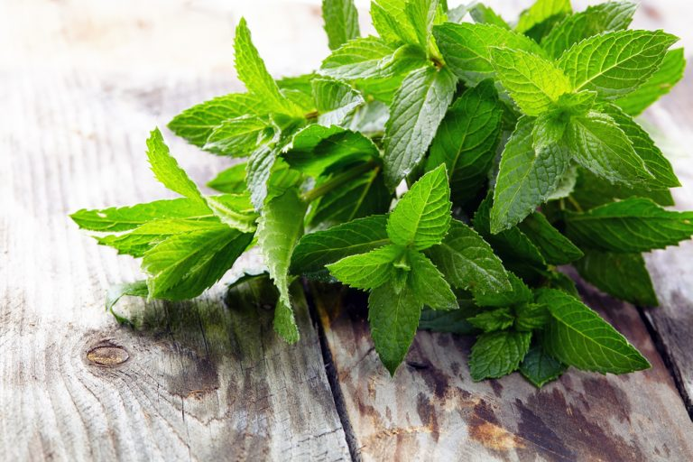 Peppermint - Featured Image