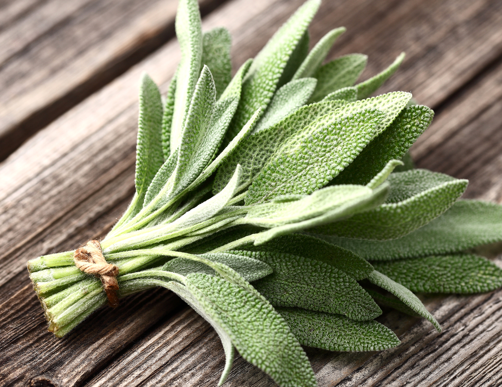 Sage herb 1