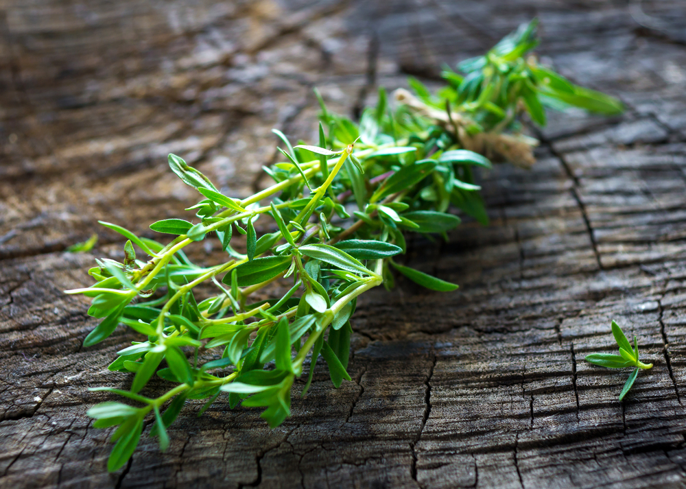 Savory Herb Article - Featured Image