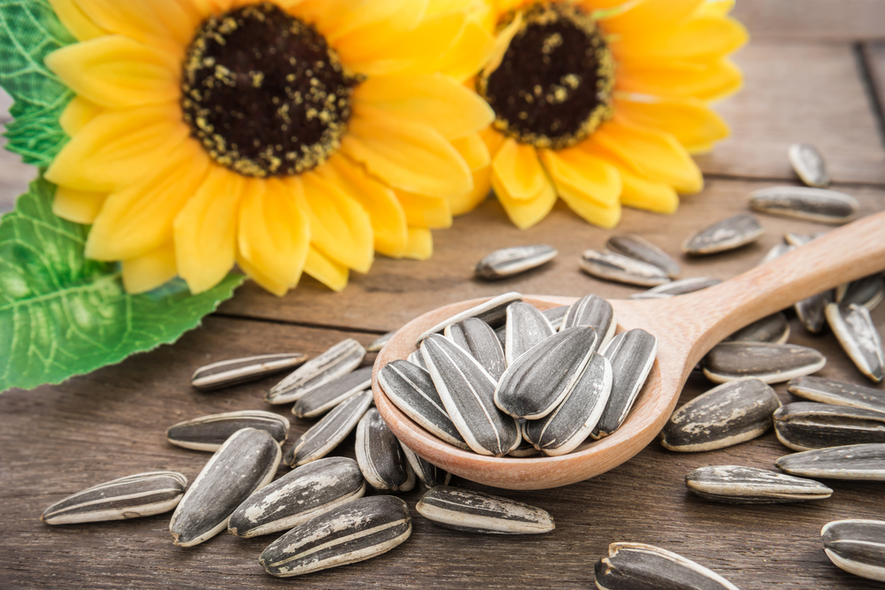 Sunflower Seeds 2