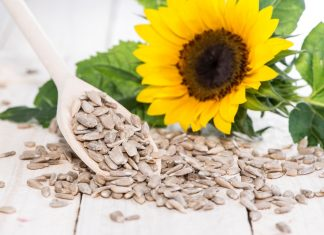 Sunflower Seeds Featured Image 2