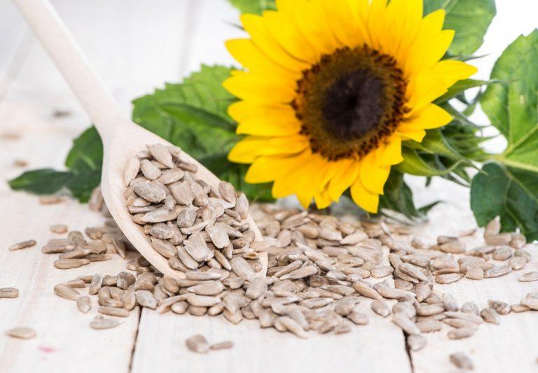 Sunflower Seeds Featured Image 2