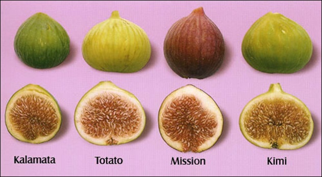 The Different Types of Figs