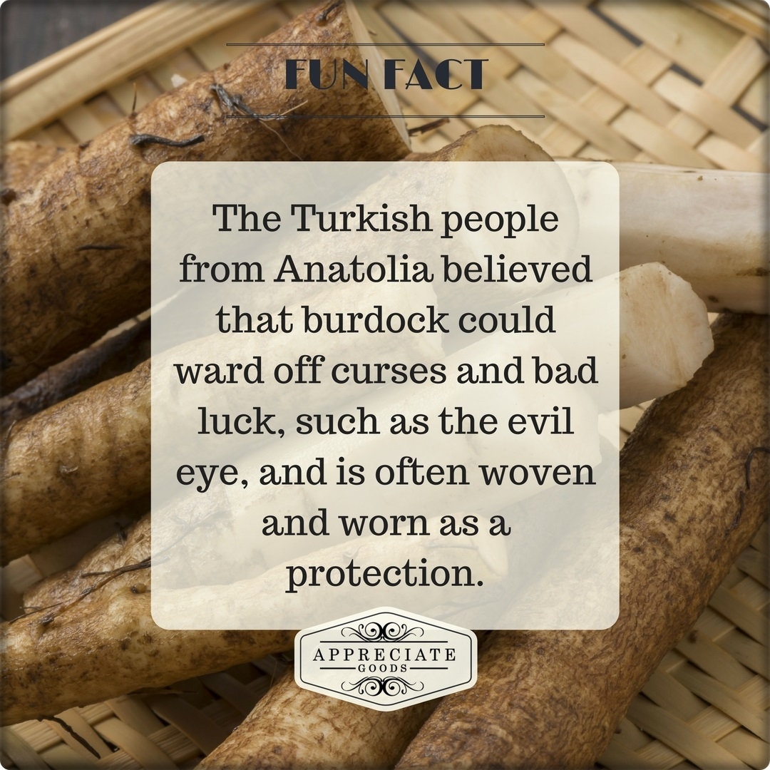 The Turkish people from Anatolia believed that burdock could ward off curses and bad luck - FUN FACT