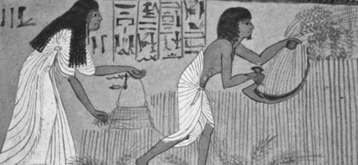 Ancient Egypt painting of wheat harvesting