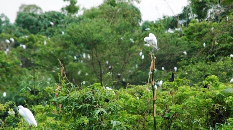 Bang Lang Stork