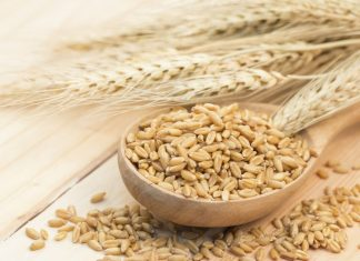 Barley Health Benefits Article - Featured Image