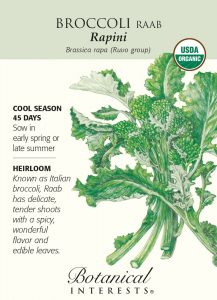 Broccoli Raab Certified Organic Heirloom Seeds 350 Seeds