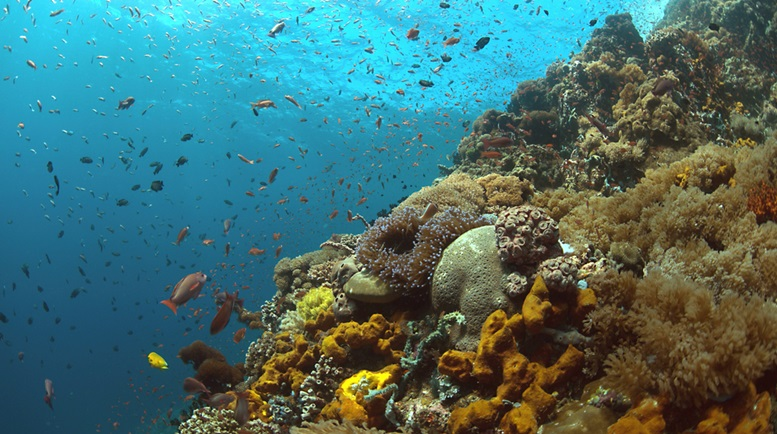 Colorful coral reef with plenty of fishes in Puerto Galera, Philippines
