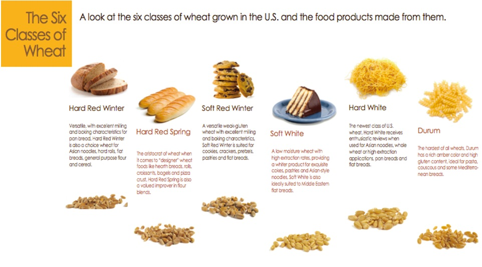 Comparison among different types of wheat flours.