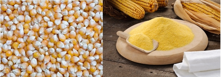 Corn kernel and milled corn flour