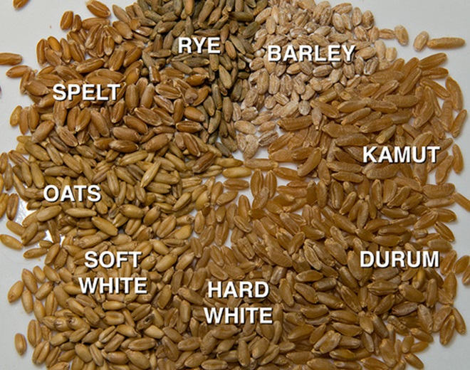Different types of wheat grains - soft white, hard white and durum
