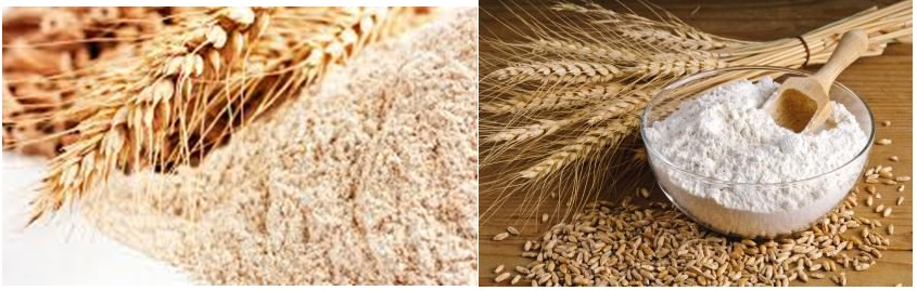 Durum wheat (left) vs. bread wheat (right)