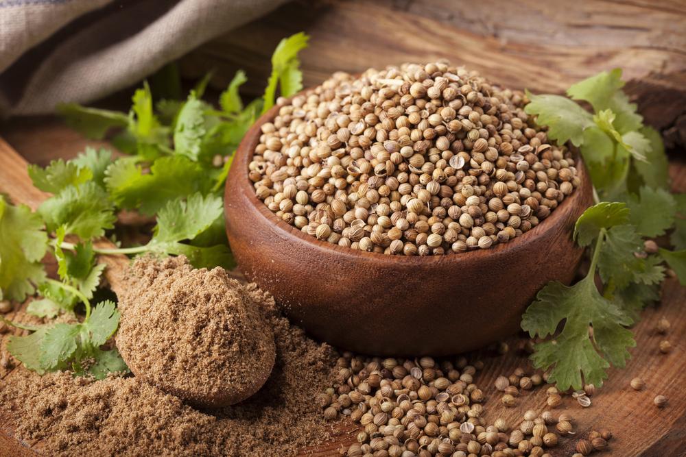 Fresh Cilantro, Cilantro Seeds and Cilantro Powder