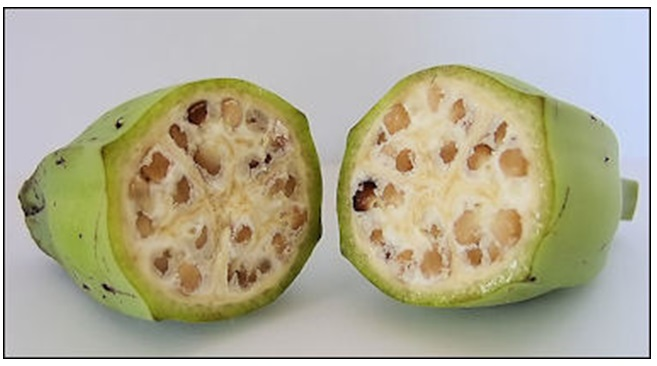 Insides of a wild banana with hard seeds inside