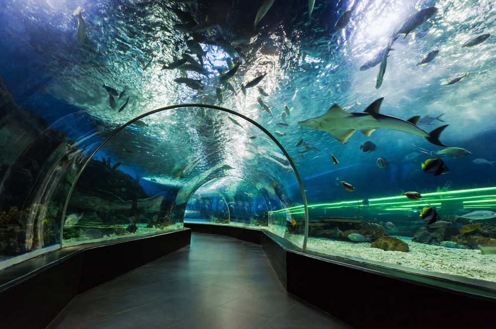 Manila Ocean Park - Underwater Tunnel - Philippines