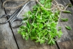 Sweet Marjoram: History, Nutrition Facts, Heath Benefits, Side Effects, and Fun Facts