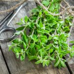 Marjoram Article - Featured Image