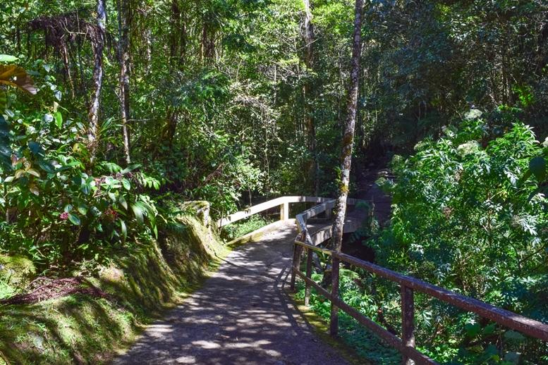 Mt. Kinabalu Botanical Garden of Kinabalu Park. Tropical equatorial flora of Malaysia. Wild nature
