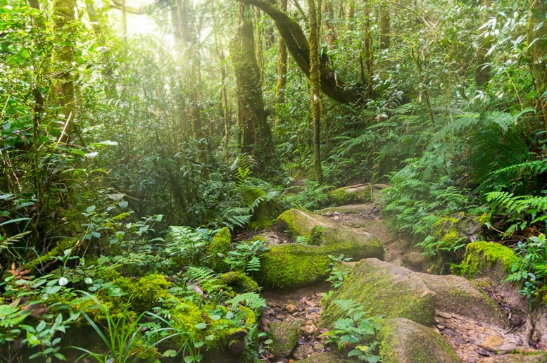 Nature rain forest with morning sunlight at Kinabalu Park, Malaysia