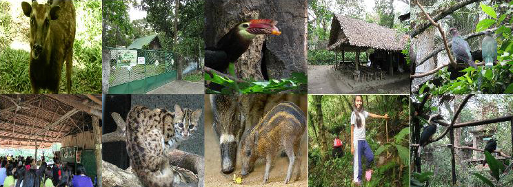 Negros Forest and Ecological Foundation Biodiversity Conservation Center