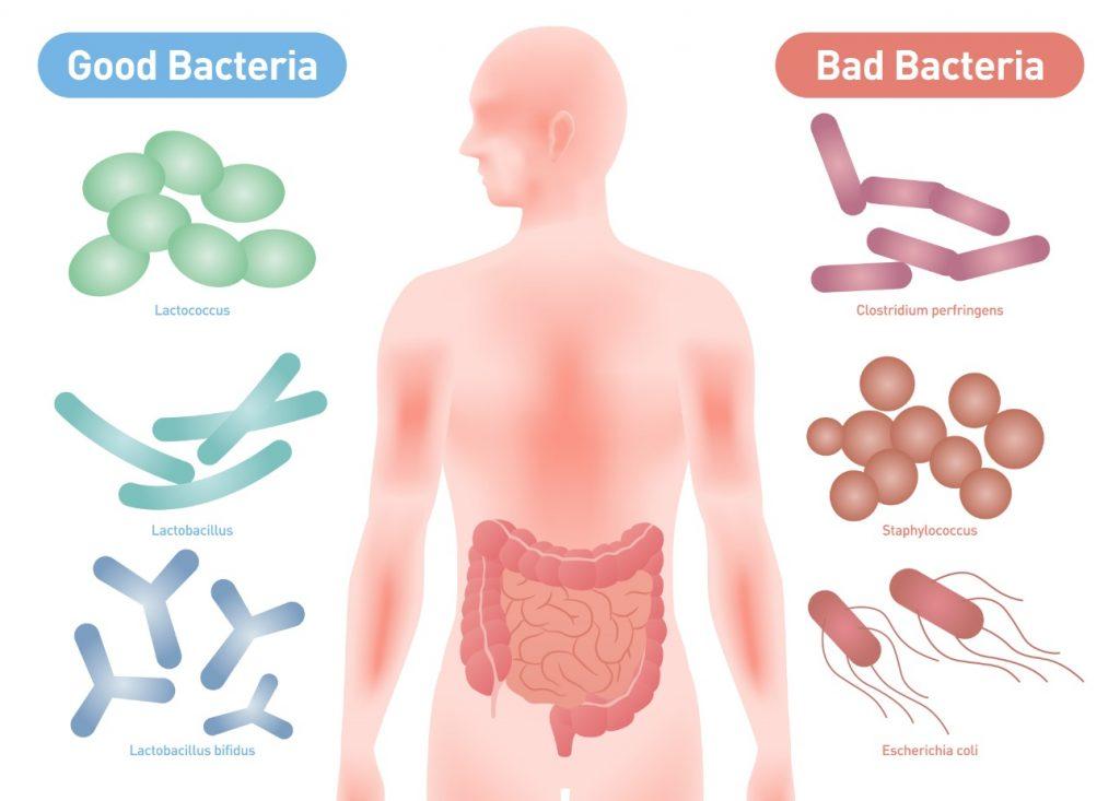 Probiotics Article - Good Bacteria VS Bad Bacteria