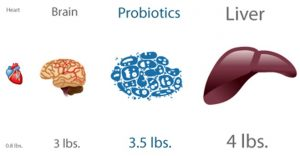 Probiotics outweigh our brain