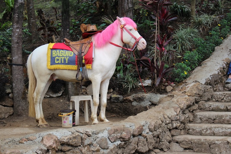 Say HI to the pink maned white horse at Baguio City, Philippines