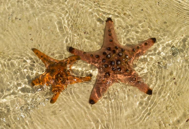 2 Starfishes at Starfish Island